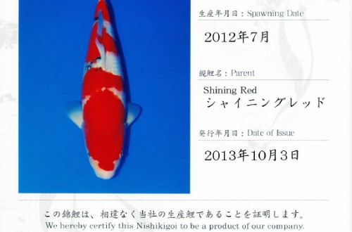 Shining Red Sanke