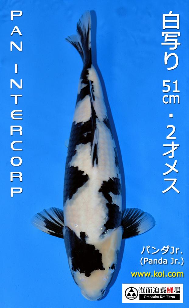 Panda Jr. 51cm
