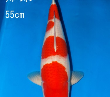 Sakai FF April Auction (30)