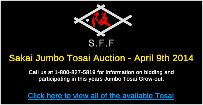 Sakai Jumbo Tosai Auction - April 9th 2014