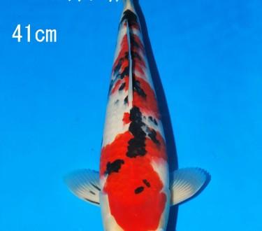 Sakai FF April Auction (110)