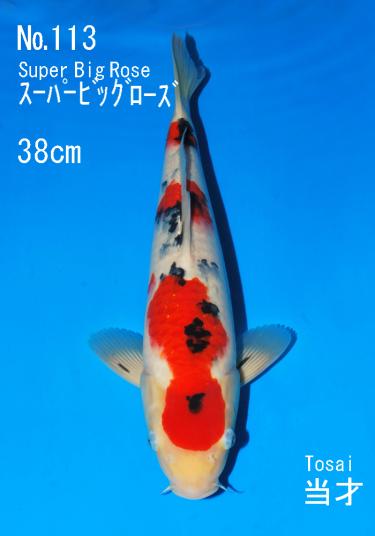 Sakai FF April Auction (113)