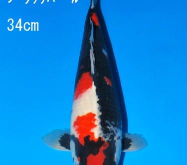 Sakai FF April Auction (123)