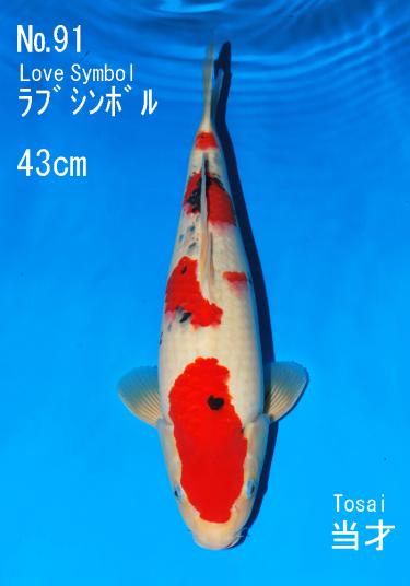 Sakai FF April Auction (91)