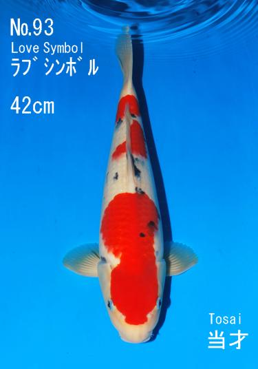 Sakai FF April Auction (93)