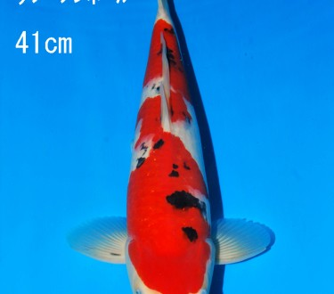 Sakai FF April Auction (94)