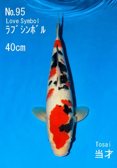 Sakai FF April Auction (95)