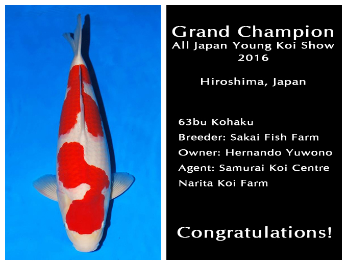 All Japan Young Koi Show Grand Champion