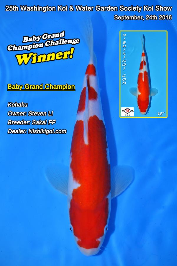 Baby Grand Champion