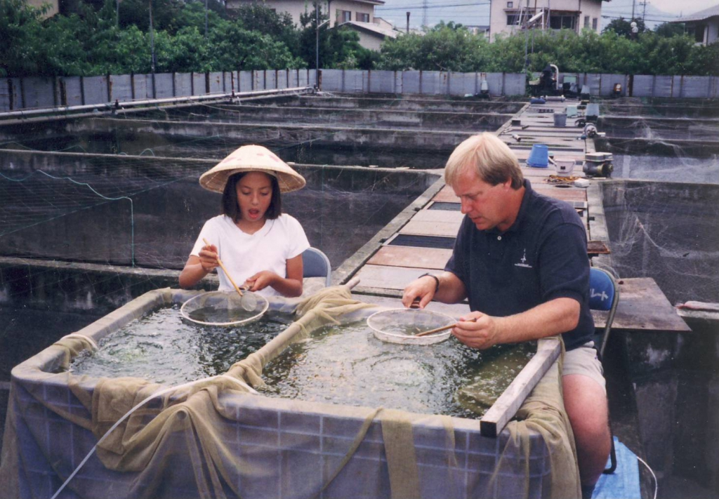 Selecting fry in Japan