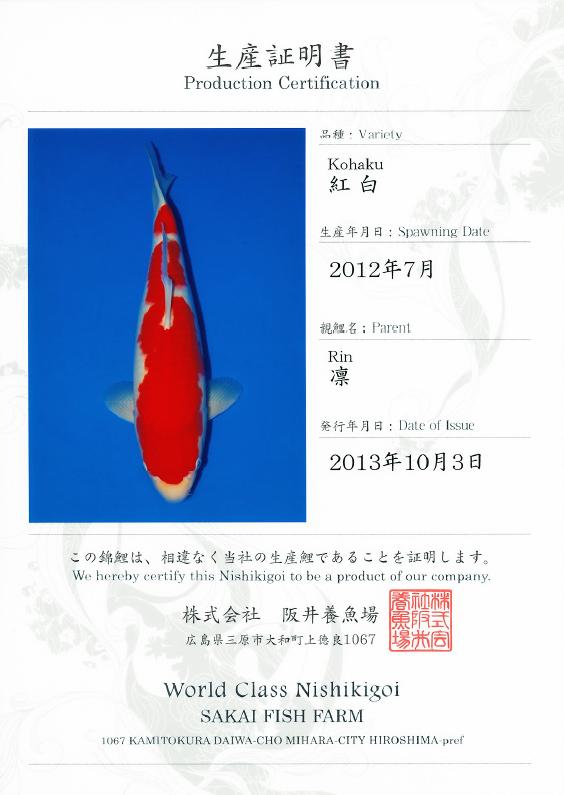 Rin Kohaku
