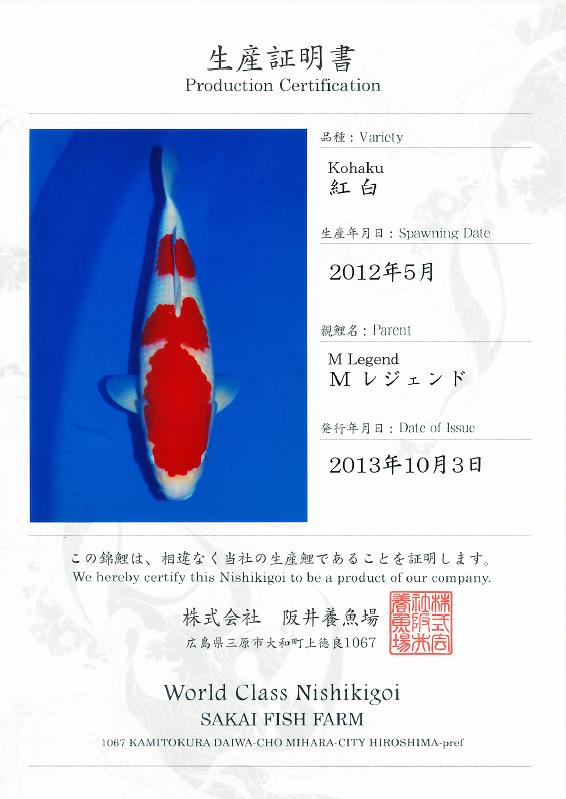 M Legend Kohaku