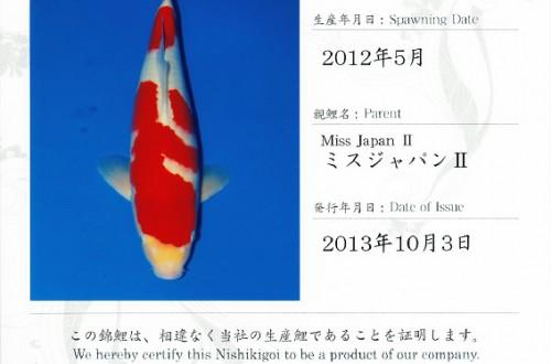 Miss Japan II Kohaku