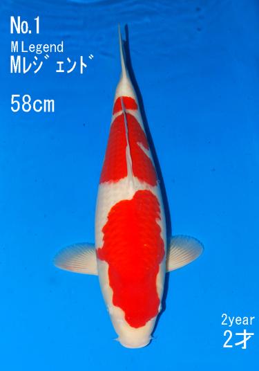 Sakai Auction (1)