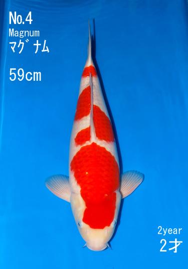 Sakai Auction (4)