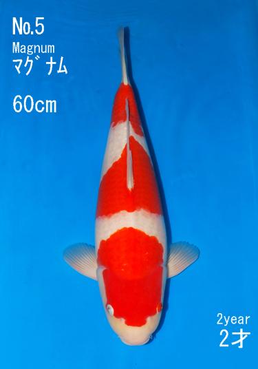 Sakai Auction (5)