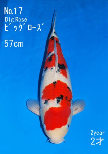 Sakai FF April Auction (17)