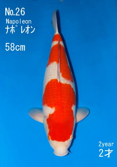 Sakai FF April Auction (26)