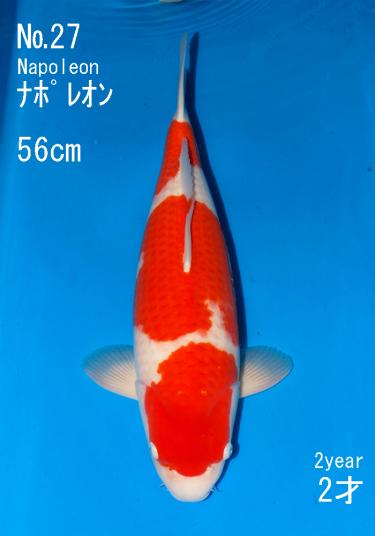 Sakai FF April Auction (27)