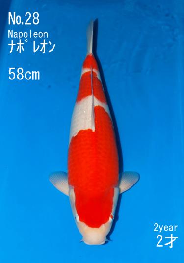 Sakai FF April Auction (28)