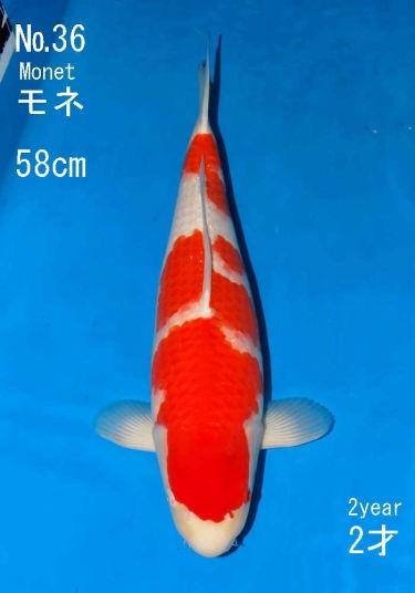 Sakai FF April Auction (36)