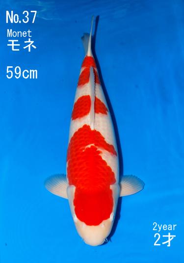 Sakai FF April Auction (37)