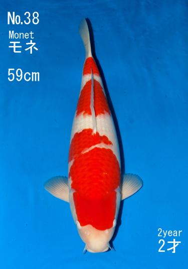 Sakai FF April Auction (38)