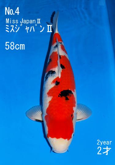 Sakai FF April Auction (4)
