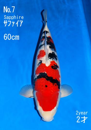 Sakai FF April Auction (7)