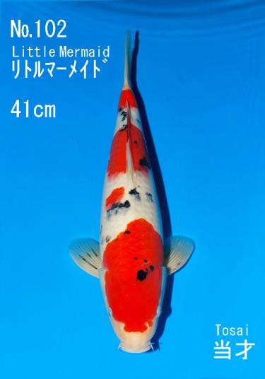Sakai FF April Auction (102)