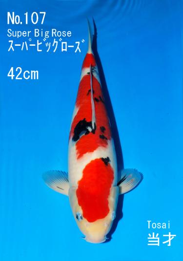 Sakai FF April Auction (107)