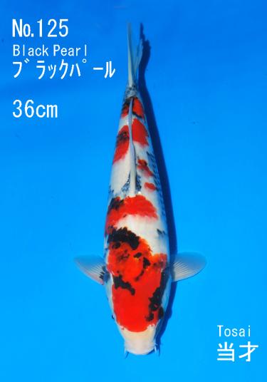 Sakai FF April Auction (125)