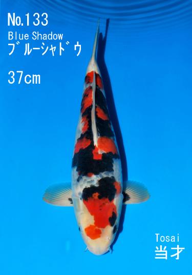 Sakai FF April Auction (133)