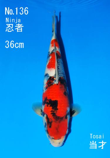 Sakai FF April Auction (136)