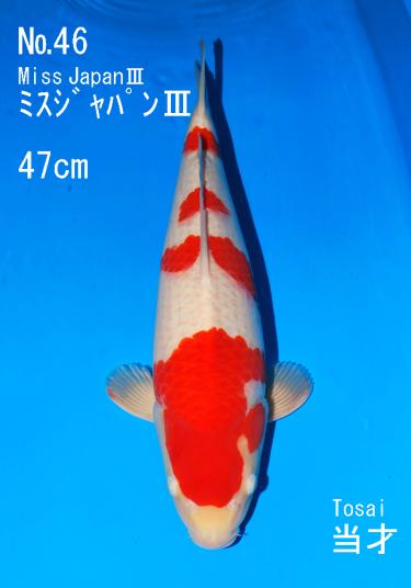Sakai FF April Auction (46)