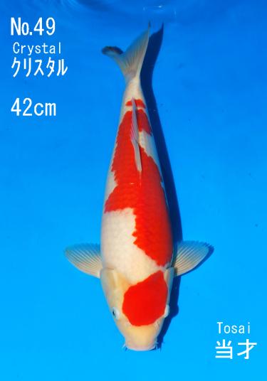 Sakai FF April Auction (49)