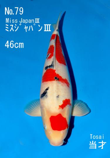 Sakai FF April Auction (79)