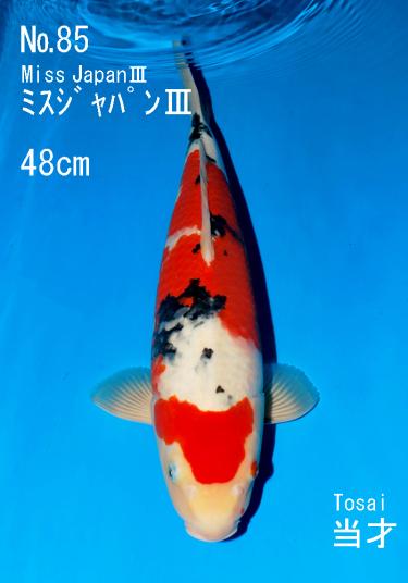 Sakai FF April Auction (85)