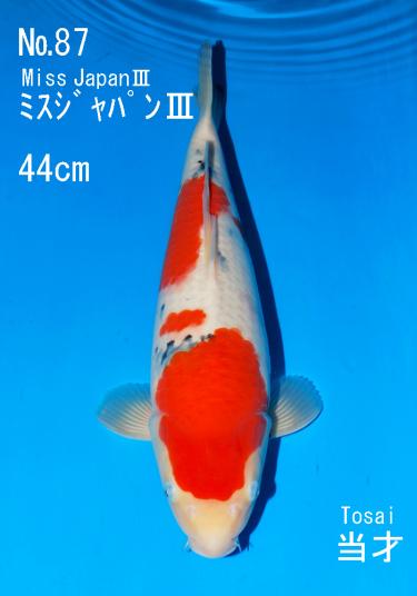 Sakai FF April Auction (87)