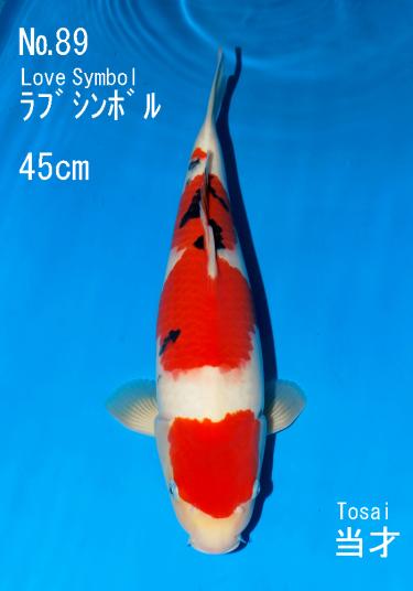 Sakai FF April Auction (89)