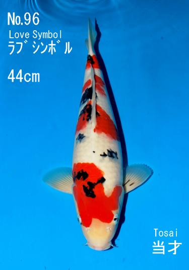 Sakai FF April Auction (96)