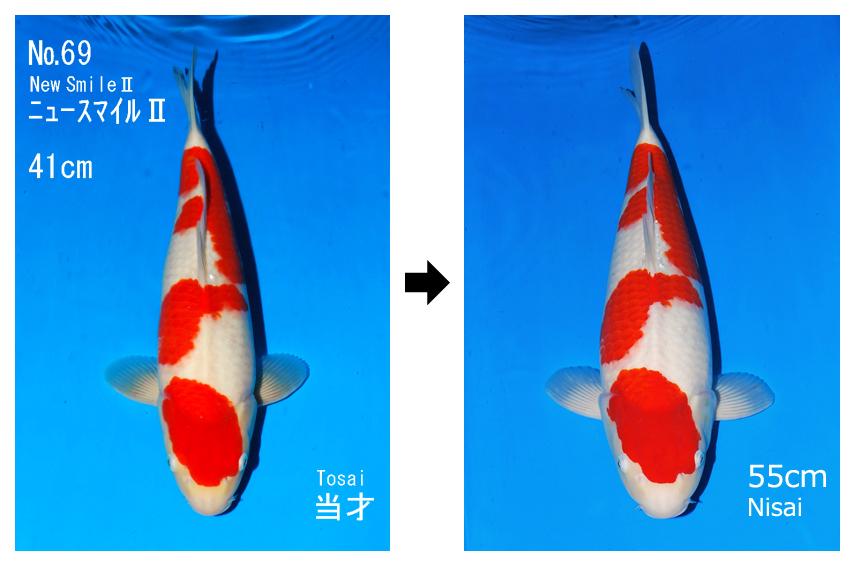 New Smile II Kohaku
